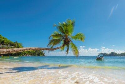 Fototapeta Kokosowe palmy na tropikalnej pla? Y.