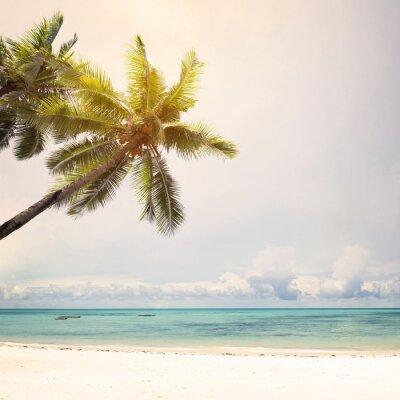 Fototapeta Kokosowe palmy na tropikalnej plaży wybrzeżu w lecie, dźwięk rocznika kolor stylizowane