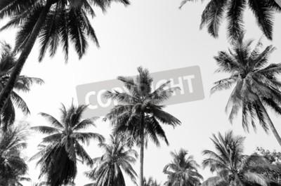 Fototapeta Kokosowe palmy przeciwko niebo palmy kokosowe