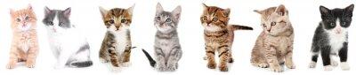Fototapeta Kolaż cute kociaków na białym tle