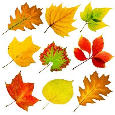 Kolekcja drzewa liście na białym tle