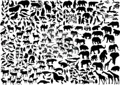 Fototapeta Kolekcja sylwetki ogromne zwierzęta
