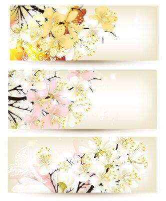 Fototapeta Kolekcja wektora tła kwiat