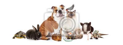 Fototapeta Kolekcja Zwierzęta domowe Razem