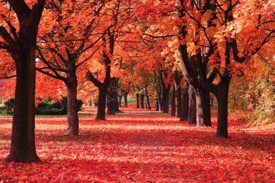 Fototapeta Kolor jesienny las