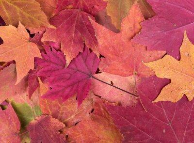 Fototapeta Kolorowe Autumn Leaves