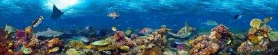 Fototapeta kolorowe bardzo szeroka panorama podwodna rafa transparent tło z rekina wiele ryb i żółwi morskich życia