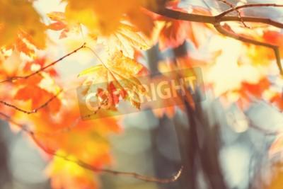 Fototapeta Kolorowe liści w sezonie jesiennym