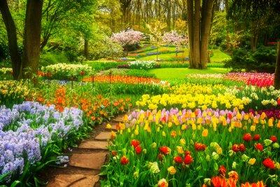 Fototapeta Kolorowe Tulipany Kwietniki i kamienia Ścieżka w wiosennym ogród formalny, retro nastrojony
