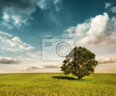 kolorowy krajobraz z pola i drzewa