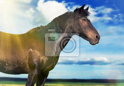 koń w polu sunny