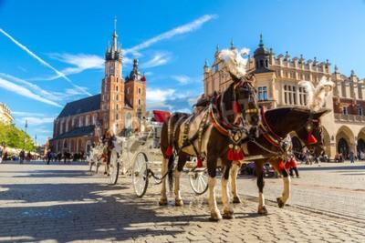 Fototapeta Koń wózki na głównym placu w Krakowie w letni dzień, Polska