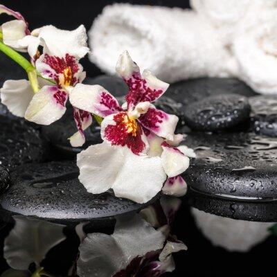Fototapeta Koncepcja Spa z orchidea kwiat z kroplami Cambria i białe ręczniki