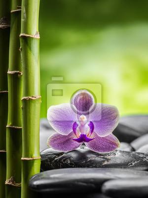 Koncepcja spa z zen kamienie bazaltowe, bambusa i orchidei