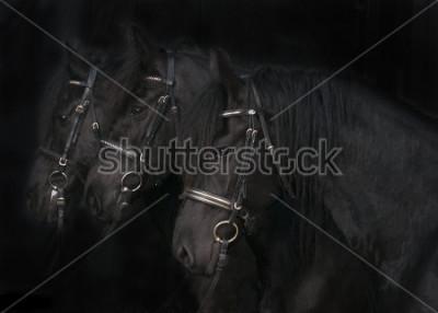 Fototapeta Konie fryzyjskie
