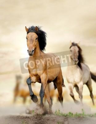 Fototapeta konie w zachodzie słońca