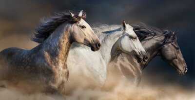 Fototapeta Konie z długimi Grzywa portret uruchomić galopem w pył pustyni