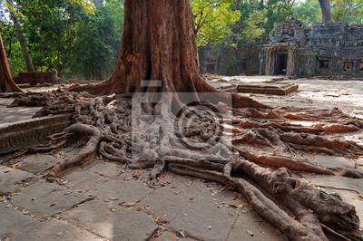 Korzenie drzew w świątyni. Ta Prohm Angkor. Kambodża