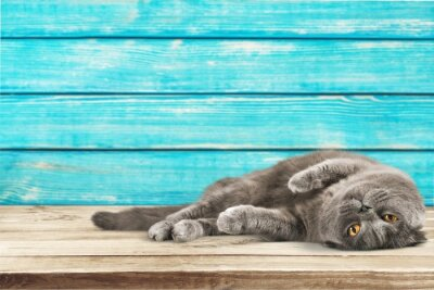Fototapeta Kot, koty, kotek.