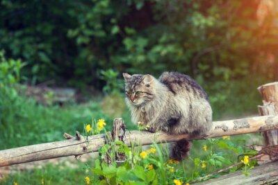 Fototapeta Kot na płocie