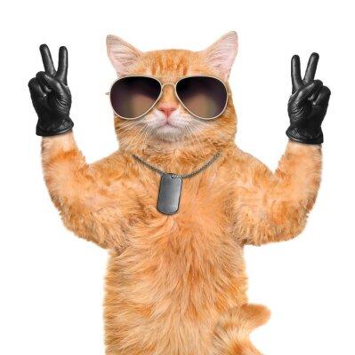 Fototapeta Kot z palców pokojowych w czarnej skóry