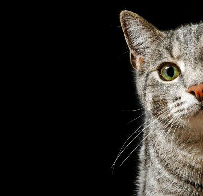 Fototapeta Kot zielone oczy