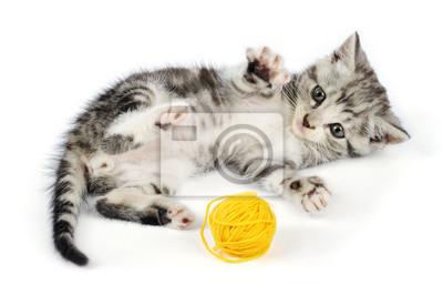 kotek gry z żółtym clew