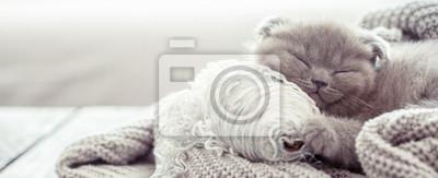 Fototapeta kotek śpi na swetrze