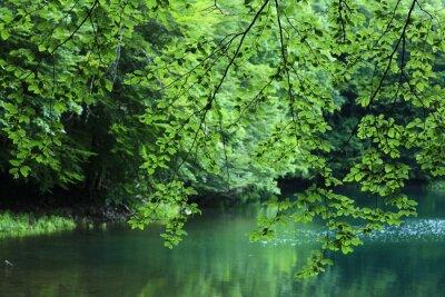 Fototapeta krajobraz las lato europy sosny
