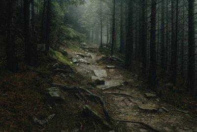 Fototapeta Krajobraz mistyczny las zakrywający z mgłą.