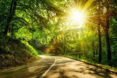 Fototapeta Krajobraz strzał z złotymi promieniami słońca oświetla malowniczych drogowego w pięknym zielonym lesie, z efektami świetlnymi i cienie
