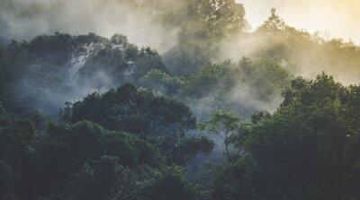 Fototapeta Krajobraz tropikalnych lasów deszczowych, w Azji