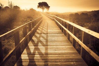 Fototapeta krajobraz z drewnianym ścieżki z drzewa o zachodzie słońca