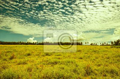 Krajobrazu wiejskiego. Szerokie pole z mieszaniny kwitnienia
