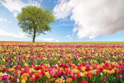 Fototapeta Krajobrazu wiejskiego z kwiatami
