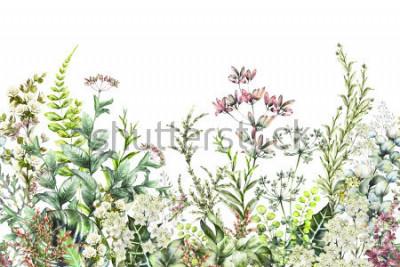 Fototapeta krawędź bezszwowa. Granica z ziołami i dzikich kwiatów, liści. Ilustracja botaniczna Kolorowa ilustracja na białym tle. kompozycja akwarelowa wiosna