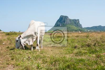 Krowa na polu