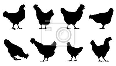 Fototapeta kurczaka sylwetki