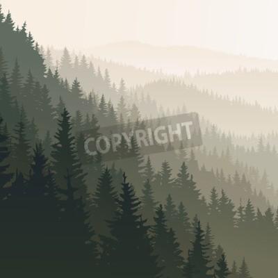 Fototapeta Kwadratowy krajobraz dzikich drzew iglastych w porannej mgle w ciemnozielony ton.