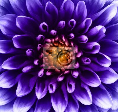 Kwiat i piękne płatki