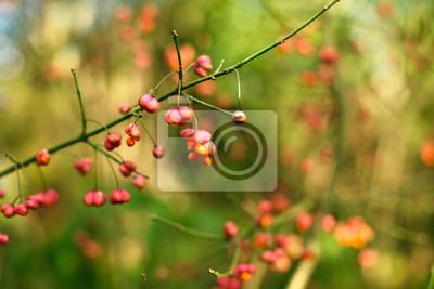 Kwiat, Jagody, Rozmycie