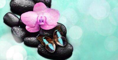 Fototapeta Kwiat orchidei i motyli