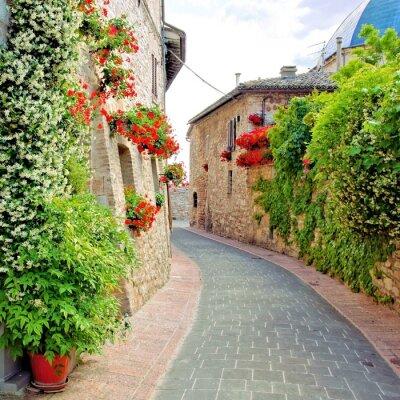 Fototapeta Kwiat ulicy w mieście Asyż, Włochy