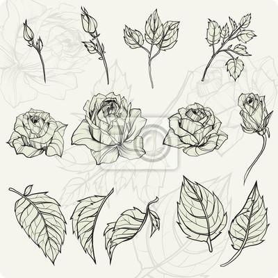Kwiat ustawić. Vintage rose zbiór elementów kwiatu