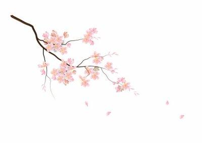 Fototapeta Kwiat wiśni kwiaty z oddziału na białym tle, ilustracji wektorowych