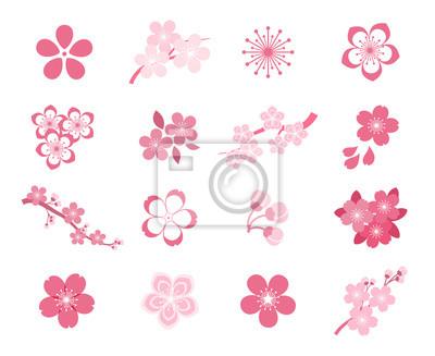 Fototapeta Kwiat wiśni sakura japoński zestaw ikon wektorowych
