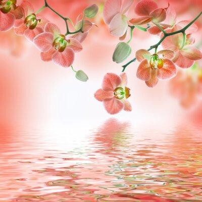 Fototapeta Kwiatów tle z tropikalnych storczyków