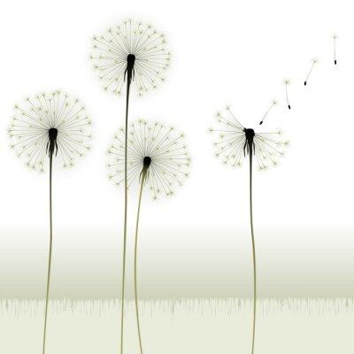 Fototapeta kwiatowy tło, mniszek lekarski