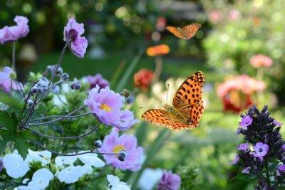 Fototapeta kwiaty 731
