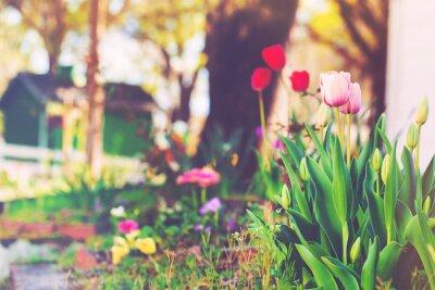 Fototapeta Kwiaty kwitnące w ogrodzie domu